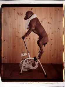williamwegman